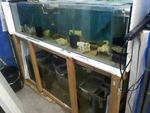 Cichlids sell out, breeding colonies and fry, breeding racks Bankstown Bankstown Area Preview