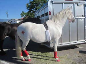 Reg Andalusian Mare