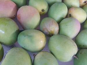 Organic home grown Mango Eastwood Ryde Area Preview