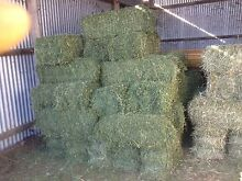 Lucerne hay sale must be sold this weekend business sold Gympie Gympie Area Preview