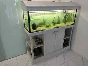 4 foot fish tank with lots of extras and 2x large catfish Bundall Gold Coast City Preview