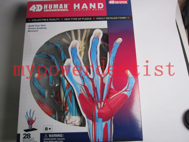 1 Set 4d Human Hand Anatomy Teaching Model 28 Parts Disposables Ebay