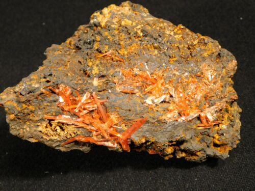 A Big! CROCOITE Crystal Cluster Tasmania 390gr
