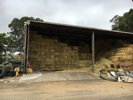 Oaten vetch hay horse quality