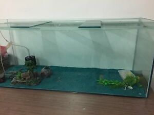 Fish Tank Mount Lewis Bankstown Area Preview