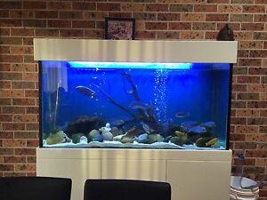 Fishtank   500 litre Woonona Wollongong Area Preview