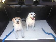 wanted  female jack russell aged minimum 2 years Belmont Belmont Area Preview