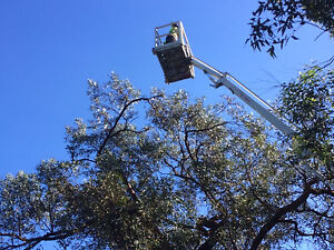 Tree Removal and mulching hire/cherry picker services Hornsby Hornsby Area Preview