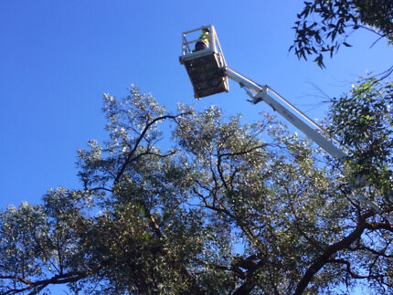 Tree Removal and mulching hire/cherry picker services