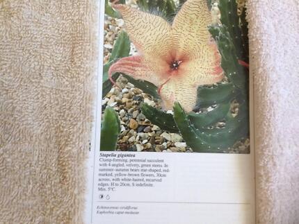 Stapelia Gigantea in Flower