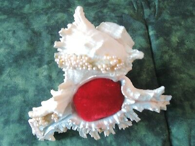 "VTG Florida Souvenir Real Shell Pin Cushion Decorated w Pearls+ Paint 5.5""T"
