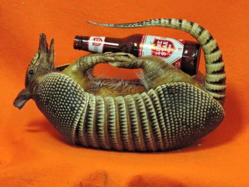 MOUNTED ARMADILLO TAXIDERMY DRUNKEN STUFFED WILD TEXAS LONE STAR