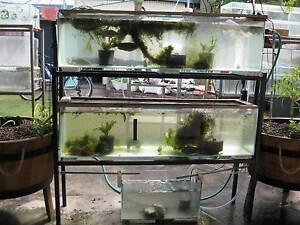 Aquaponics systems for sale gumtree australia free local for Balcony aquaponics
