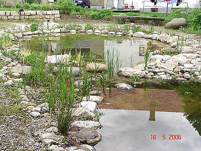 40 wasserreinigende Teichpflanzen Filterpflanzen  Sortiment   7 Verschiedene