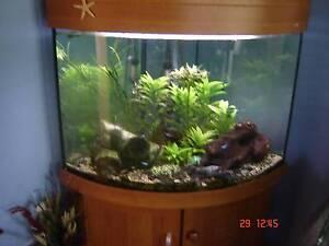 80L Tropical Fish Tank (Corner) Dubbo Dubbo Area Preview