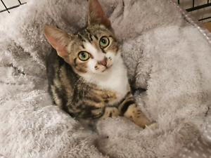 Kitten La Perouse is ready to adopt