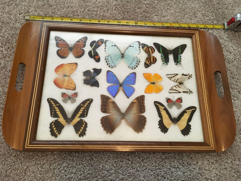 Butterfly Taxidermy Wood Inlaid Tray Vintage