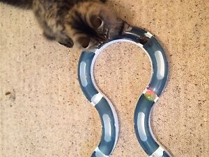 Cat toy Bateman Melville Area Preview