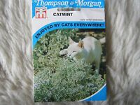 Seed T&m Flower Catmint Seeds Rrp £2.99 -  - ebay.co.uk