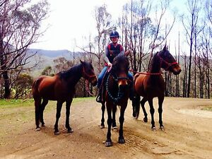 Horse Riding Ranelagh Huon Valley Preview