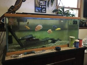 80-90G fish tank with canopy, led light,filter, heater, and fish