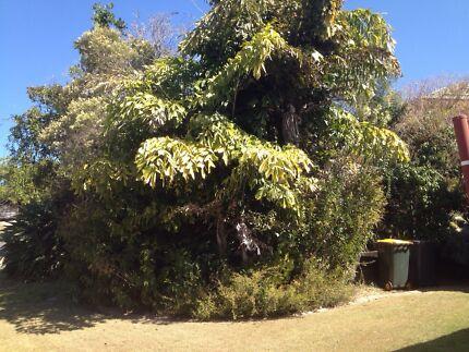 Trees , mowing , garden /yard clean ups