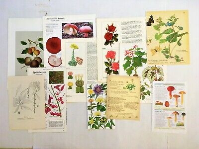 30 Botanical Book Pages Junk Journals Paper Crafts Edith Holden Flowers Trees