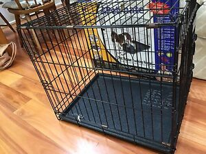 Petmate pet home training kennel Artarmon Willoughby Area Preview
