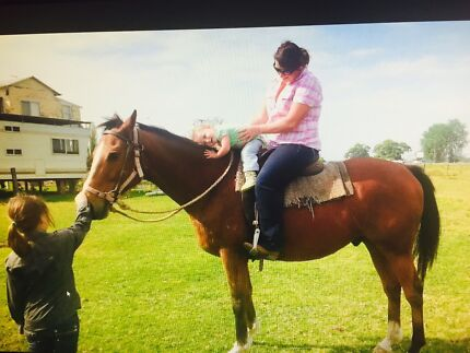 Experienced pony club and show horse Guyra Guyra Area Preview