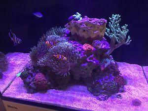 Marine Reef Aquarium - Red Sea Reefer 170 Hilton Fremantle Area Preview