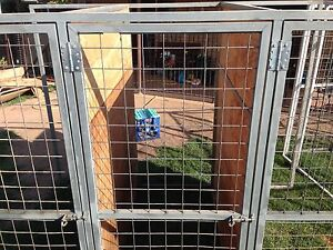 Dog kennels Morisset Lake Macquarie Area Preview