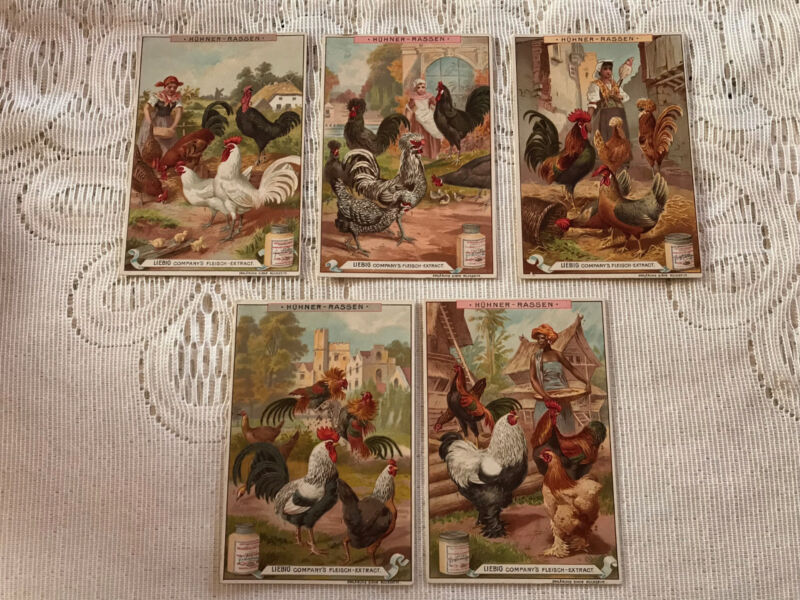 (5) 1880 Varieties of Chickens Lovely Scenes Liebig Victorian Trade Cards
