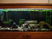 4 foot Fish Tank + 2 foot Fish Tank + Accessories Penrith Penrith Area Preview