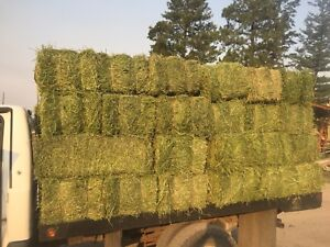 Second cut alfalfa small squares