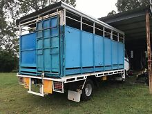 Cows heifers Bulls transport Norwell Gold Coast North Preview