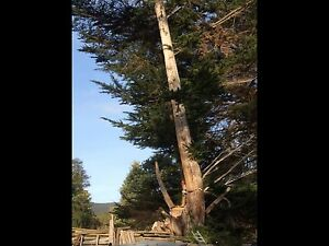 Wanted millable logs macrocarpa pine... Geeveston Huon Valley Preview