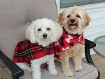 Judy's Unique Dog Coats & Scarves