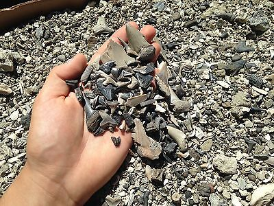 *THE BEST* Fossil Shark Tooth Dig Material Teeth Megalodon Tiger Bull Necklace