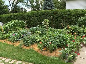 Looking to rent or borrow land for garden Peterborough Peterborough Area image 2
