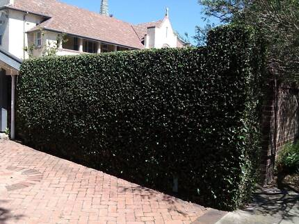 Lawnmowing / Hedging / Gardening Eastwood Ryde Area Preview