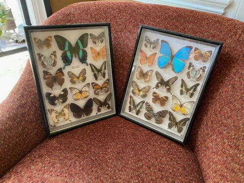 BEAUTIFUL Butterfly Framed Collection Set of 2