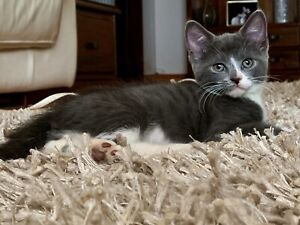 Available for Adoption: Victor