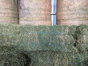 Lucerne hay, small squares Yalca Moira Area Preview
