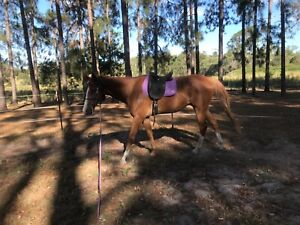 Horse Rugs In Jimboomba 4280 Qld Horses Ponies Gumtree Australia Free Local Clifieds
