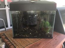 Blue Planet 20lt Fish tank / reptile tank / crazy crabs Gwelup Stirling Area Preview