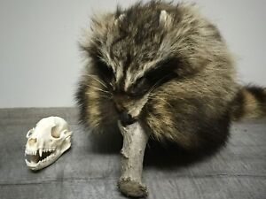 Davy Crockett Fur Hat