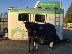 Warmblood height horse trailer for sale