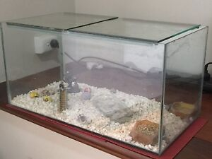 5 x Crazy Hermit Crabs + Tank + Food + Setup Maida Vale Kalamunda Area Preview