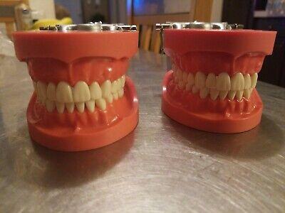 Dentoform Typdont Teeth Dental Students Training Model Sell Dentistry Lot Of 2
