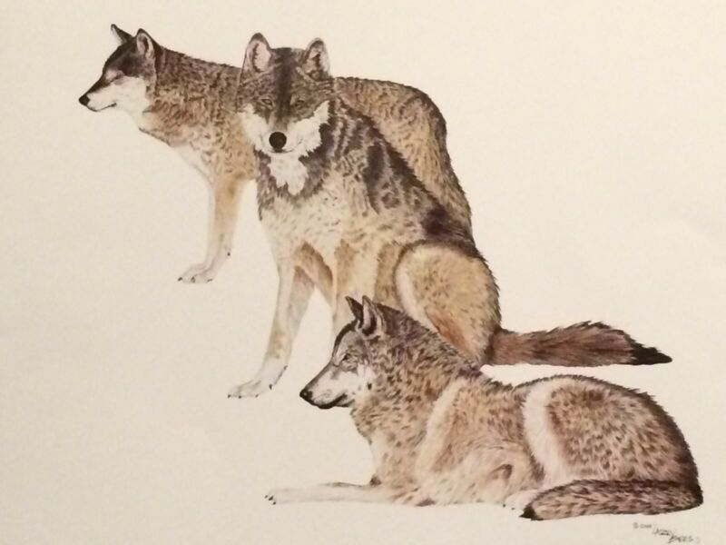 """Western Art / Wildlife-Wolves """"Trilogy"""" color print by artist Larry Bees"""